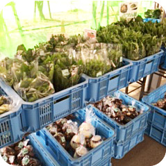 農産物直売所